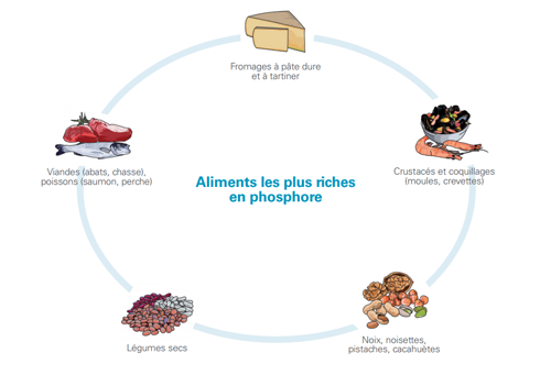 aliments-le-plus-riches-en-phosphore